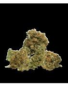 CBD Flowers +0,2% THC