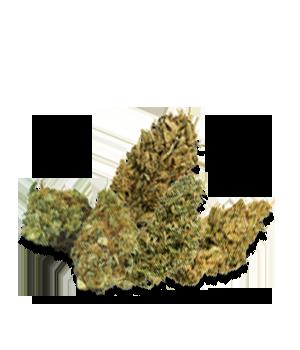 CBD Fiori -0.2% THC
