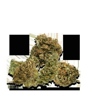 CBD Fiori +0.2% THC